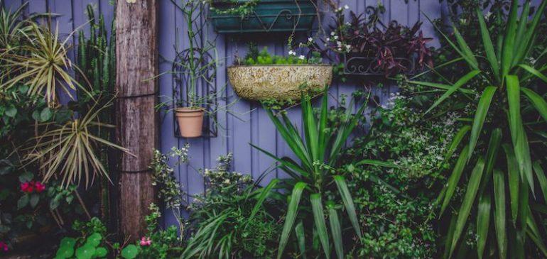 Utrecht deelt gratis plantjes uit